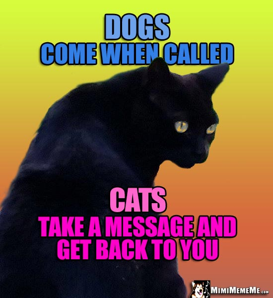 Image of: Math Black Cat Says Dogs Come When Called Cats Take Message And Get Back Wide Open Pets Funny Felines Tell Cat Vs Dog Jokes Cats Dissing Dogs Humor Meow