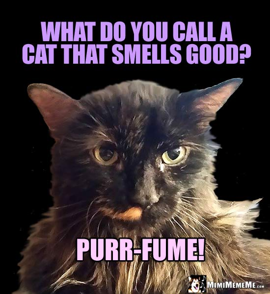 Fancy Cat Asks: What do you call a cat that smells good? Purr-fume!