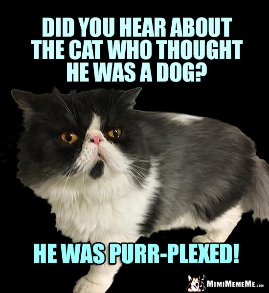 Cat Conundrum Did You Hear About The Cat Who Thought He Was A Dog