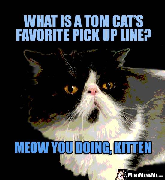 Tom Cat Jokes, Cat Pick Up Lines, Funny Feline Memes, A