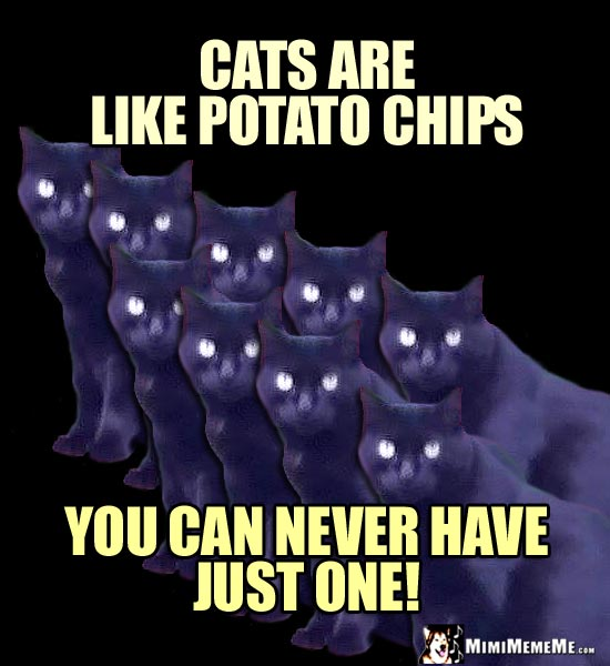 Nine Cats Say: Cats are like potato chips. You can never have just one!