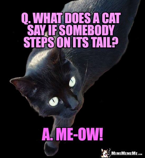 Black Cat Joke: Q. What does a cat say if somebody steps on its tail? A. Me-ow!