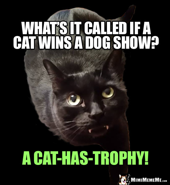 Fang Cat Asks: What's it called if a cat wins a dog show? A Cat-Has-Trophy!