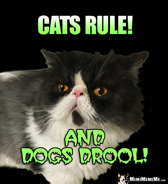 Funny Cat Says: Cats Rule! And Dogs Drool!
