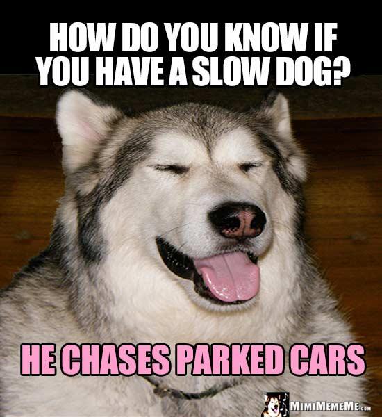 dogParkedCar.jpg