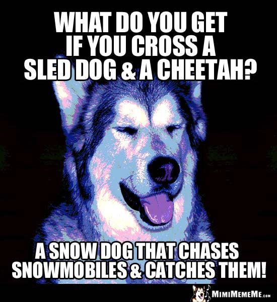 Sled Dog Jokes Funny Snow Dogs Husky Amp Malamute Humor Pg