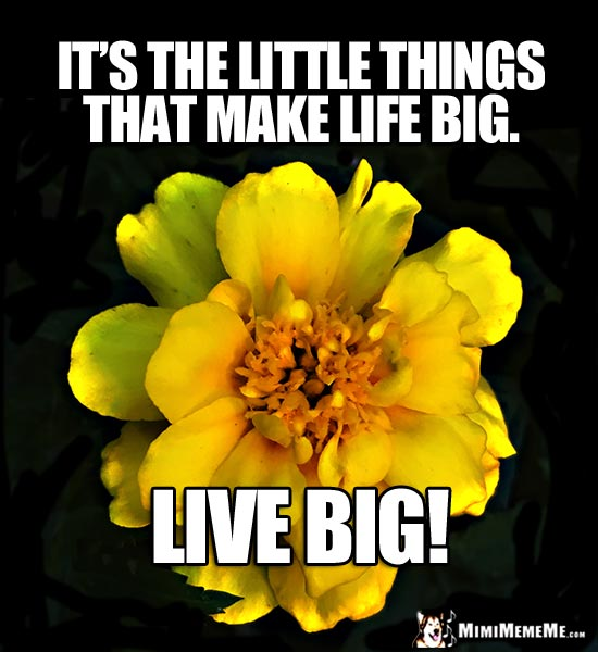 Pretty Flower with Kind Words: It's the little things that make life big. Live Big!
