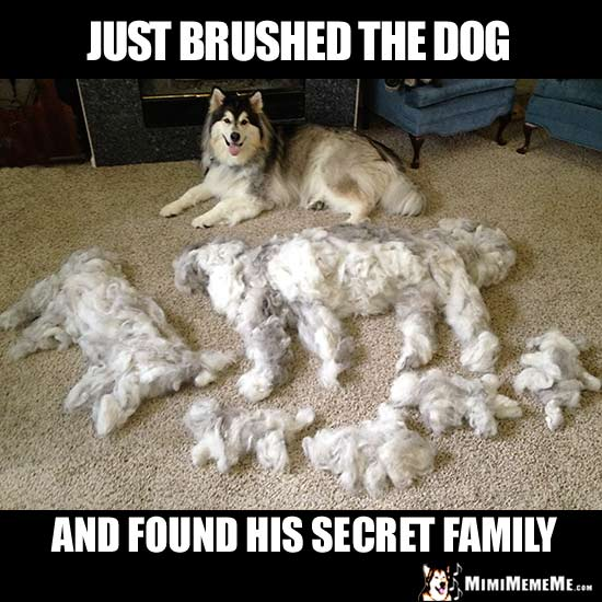arf-ing funny dog memes  doggie style jokes  clever canine comedy  pg 4