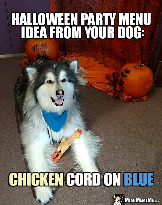 Halloween Dog Jokes Funny Dogs Wearing Costumes Spooky