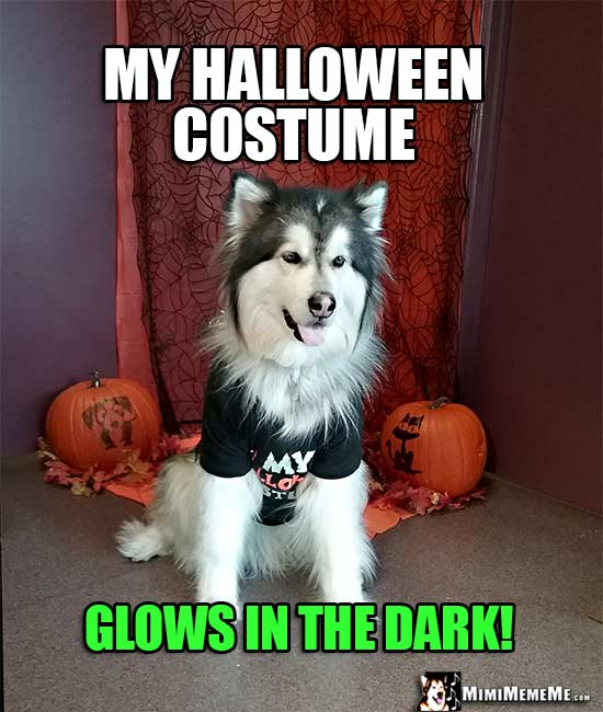 Halloween Dog Jokes, Funny Dogs Wearing Costumes, Spooky Dog