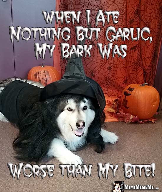 Dog Dressed in Witch Costume Says: When I ate nothing but garlic, my bark was worse than my bite!