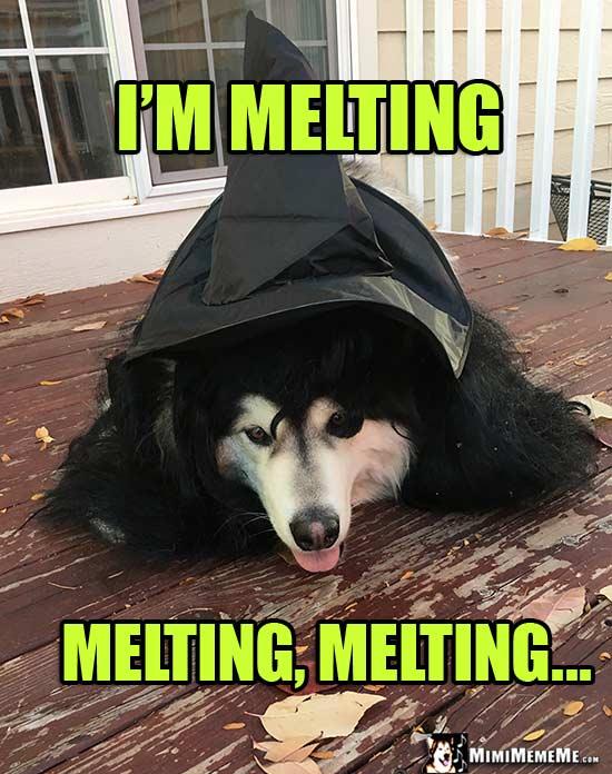 Funny Melting Cat Pics
