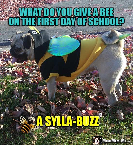 Dog School Jokes, Funny Pup Homework Humor, Smart Canine ...