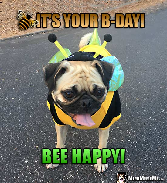 Pug Happy Bee-Day! Happy Birthday From Funny Pug In Bee
