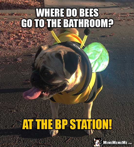 Pug Dog Dressed Like a Bee Asks: Where do bees go to the bathroom? At the BP Station!