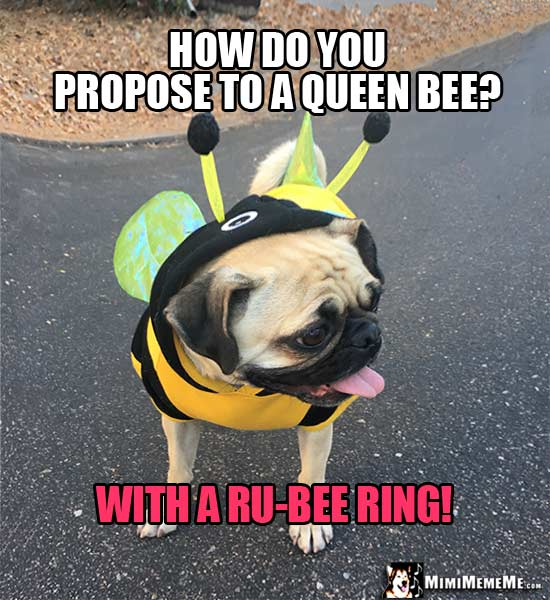 Funny Pug In Bee Costume Tells Bee Jokes And Riddles Pg 2