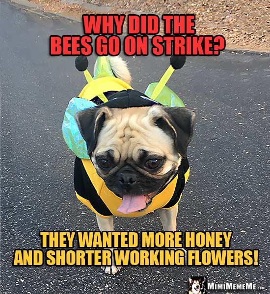 Pug Bee Funny Jokes Pug Wearing Bee Costume Humor Meme Pg